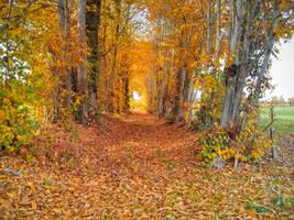 Autumnal Corridor: Red Path, Blue Thread