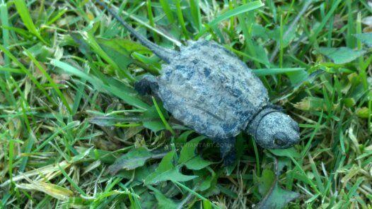 Tiny Turtle in New York! by TSofian