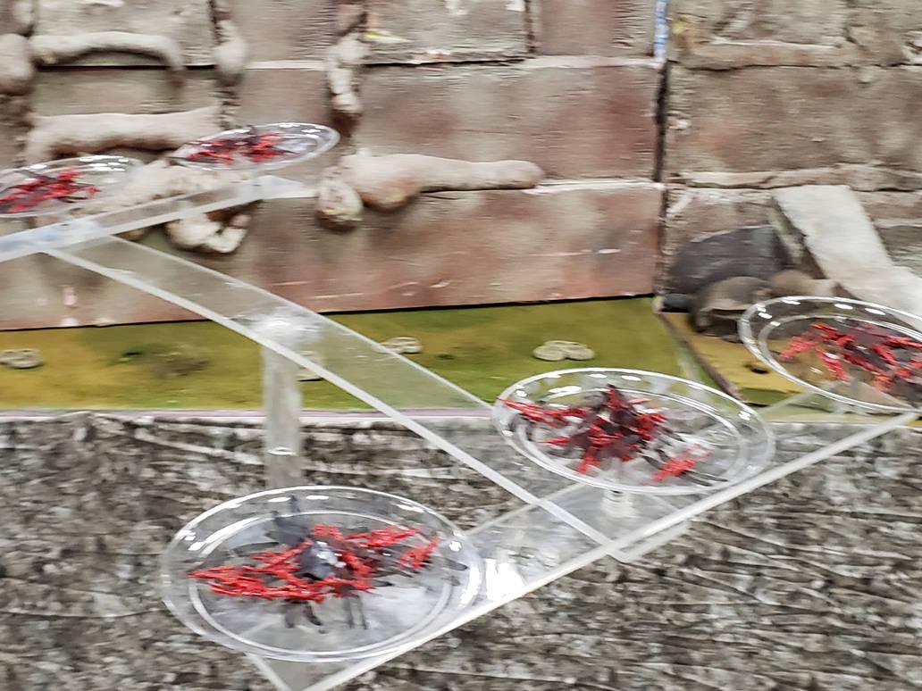 defending flying Lancers prepare to intercept the  by TSofian