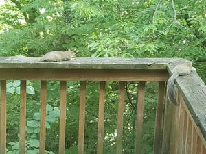 squirrel sundeck