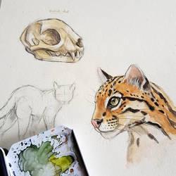 ocelot sketches