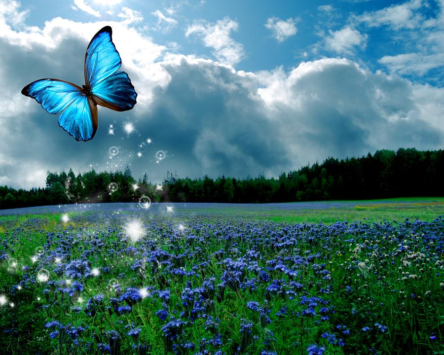 Summer Butterfly by MoRbiD-ViXeN