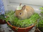 My bunny Pfoetchen