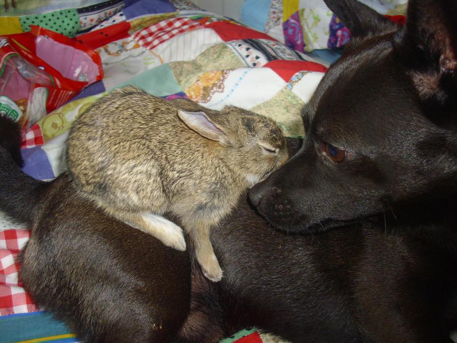 Rabbit and dog by Hirotaka712