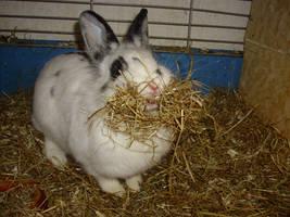Rabbit ,,Flecktschen' by Hirotaka712