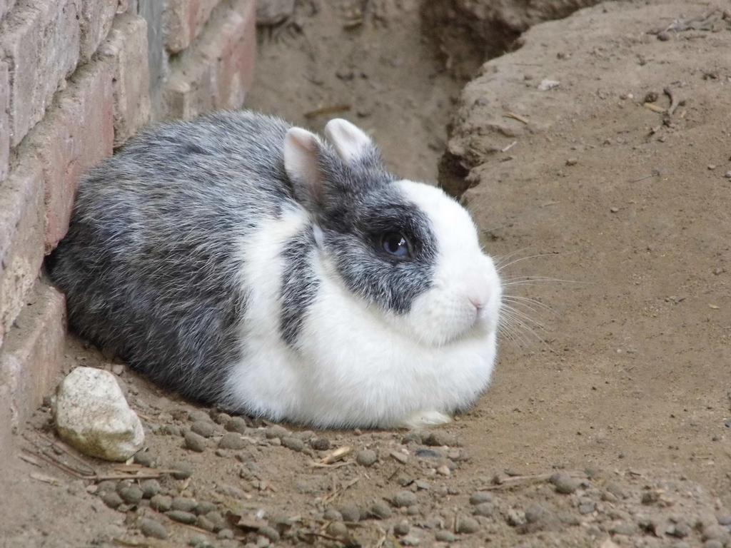 Rabbit by Hirotaka712