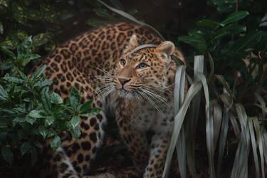 Tairi in the Undergrowth