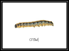 Caterpillar Critter by estesgraphics