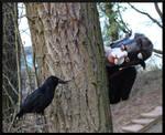Cat Vs Crow