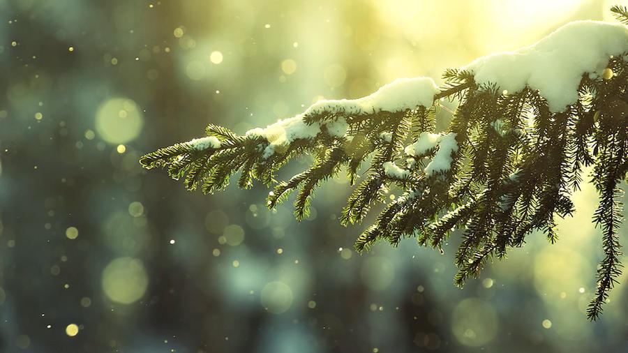 Snow on branch by ecKKKo