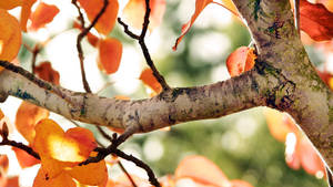 Fall tree branch