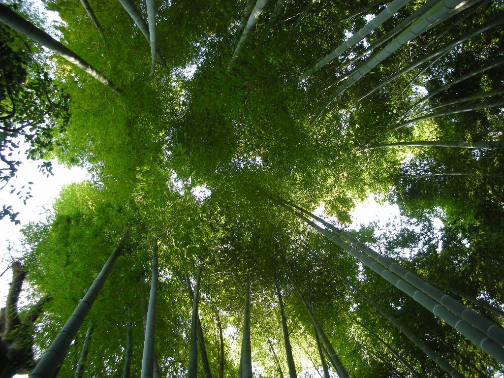 Bamboo Life by TheKuma