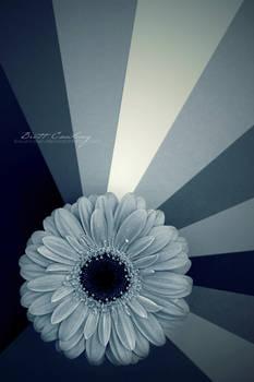 Flower rays