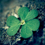 Clover and Drop