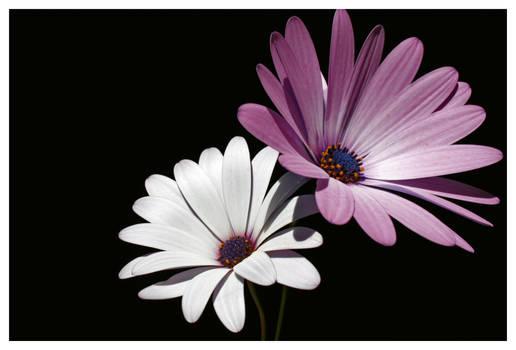 Flowers :stock: