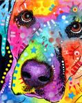 labrador close-up
