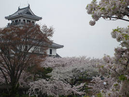 More Blossoms by Ekuboryu