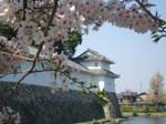Cherry Blossoms 103