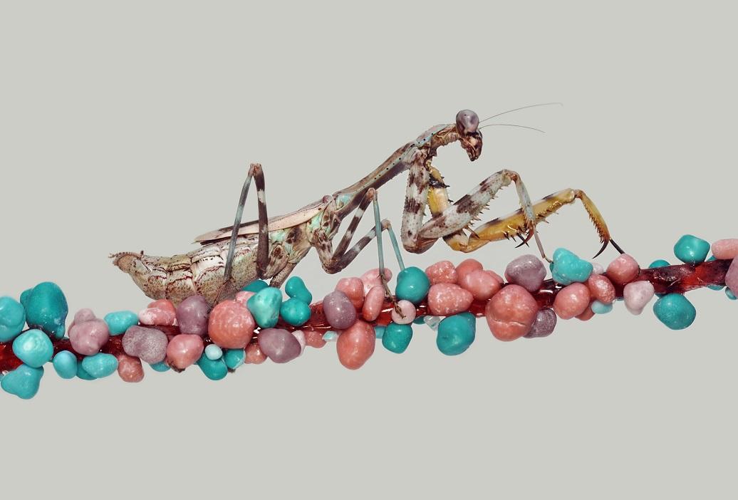 Mundae.On.Nerds.Rope by OctoberRainne