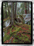 Tangled Roots and Rocks by mastermayhem