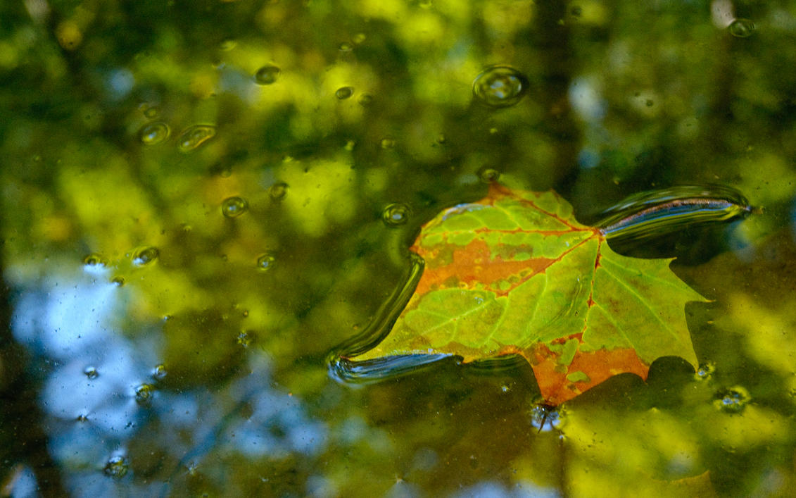 Prelude To Autumn - Desktop by mastermayhem
