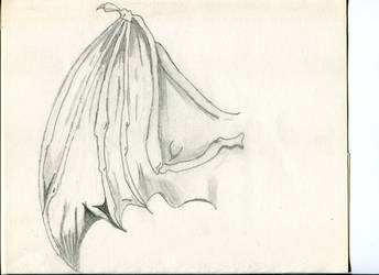 Bat wing study by Nervosix