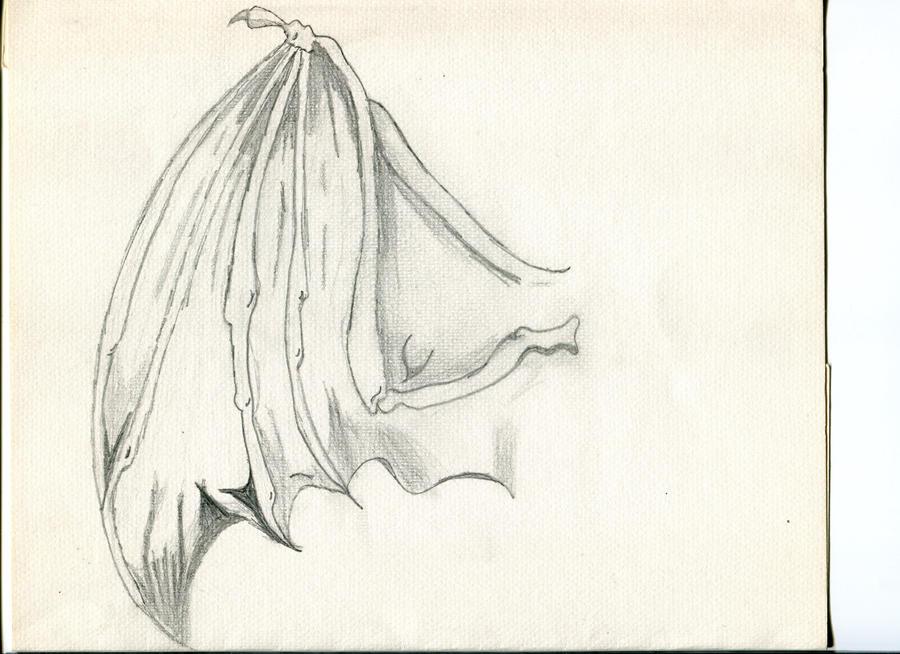 Bat wing study by Nervosix