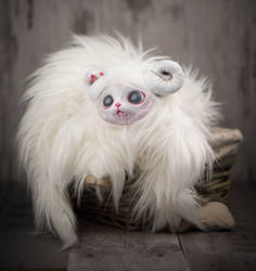 Polar Cat
