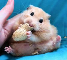 Chmurka has a peanut 2