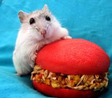 Hamster Pompon and Hamburger