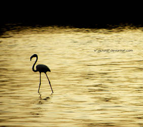 flamant rose by VictorD7