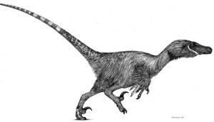 Velociraptor by Monopteryx