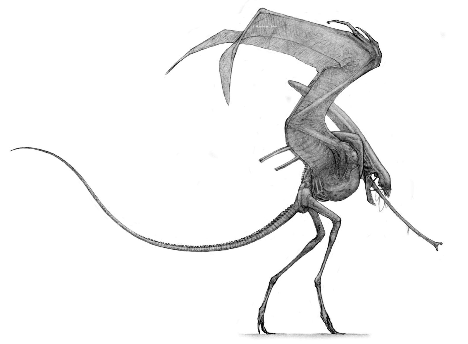 Airamorph by Monopteryx