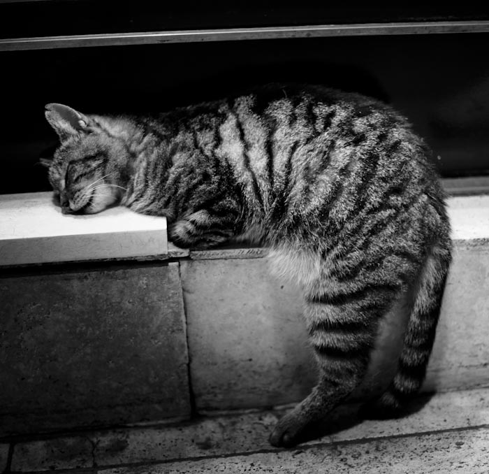 Sleepy Cat by bessonben
