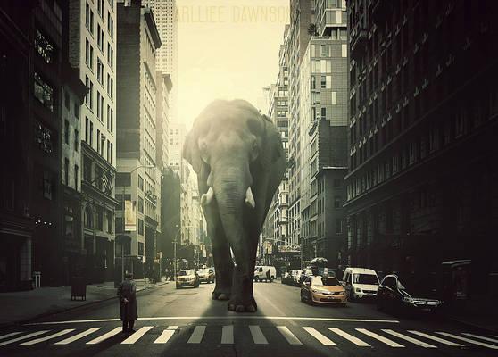 Elephant on city!