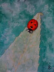 2010.05 - Lady bug on leaf