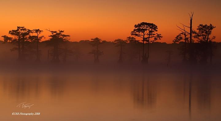 Spirit Trees by TRBPhotographyLLC