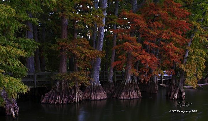Colors Change by TRBPhotographyLLC