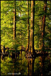 Reelfoot Reflections