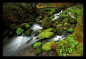 Smoky Mountain Greens by TRBPhotographyLLC