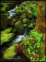 Fresh Green, GSMNP by TRBPhotographyLLC
