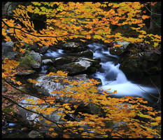 Autumn III GSMNP 2010 by TRBPhotographyLLC