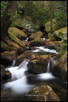 Trees Water and Rocks