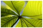spring's green III by Blaumohn