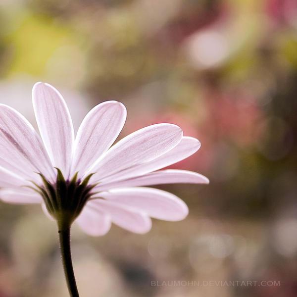 bright side of life by Blaumohn