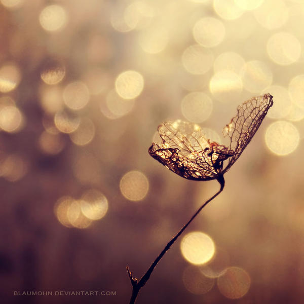 make a wish by Blaumohn