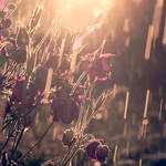 dust in the summer rain