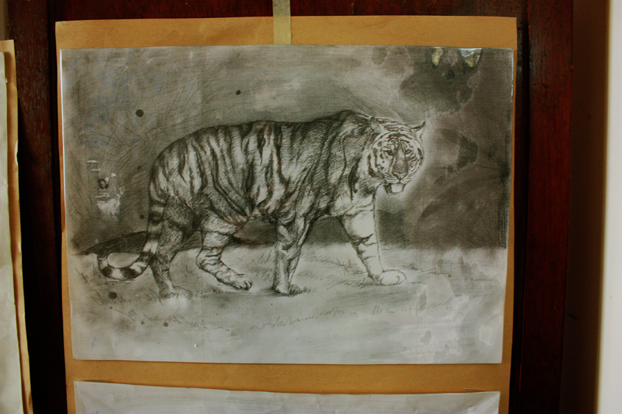 Animals Tiger by hxpt
