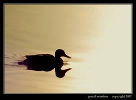 One Duck by GeraldWinslow