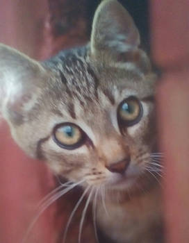 Calender cat pic